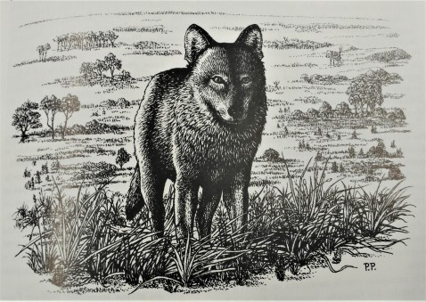 Illustration Loup