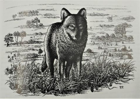 Illustration Loup