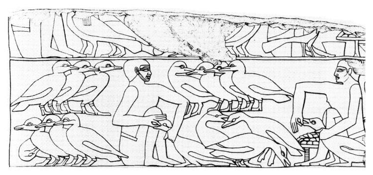 Egyptiangeesefeeding